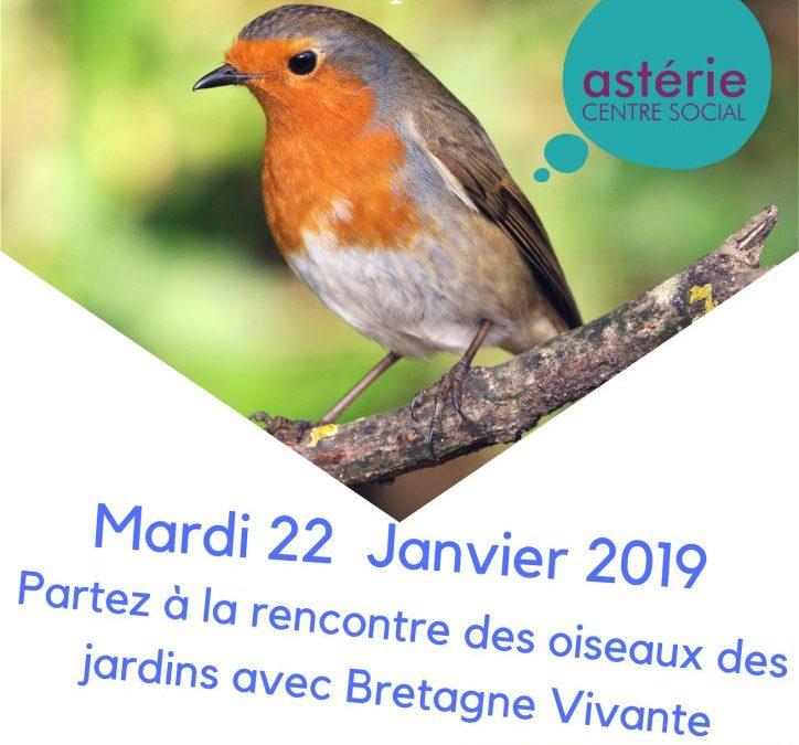 Sortie Loisirs Découvertes et curiosités: Oiseaux des jardins avec l'association Bretagne Vivante.