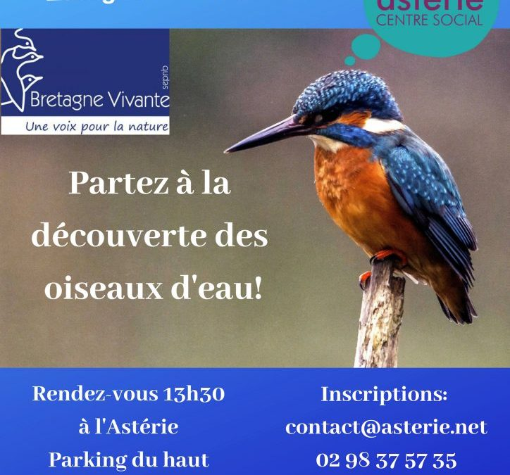 Sortie Loisir et Découverte avec Bretagne Vivante, les oiseaux d'eau étang du Relecq-Kerhuon. Mardi 26 Mars 2019